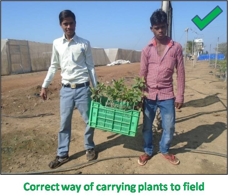 Package of Practice: Plantation / Earthing up Level | VNR Nursery